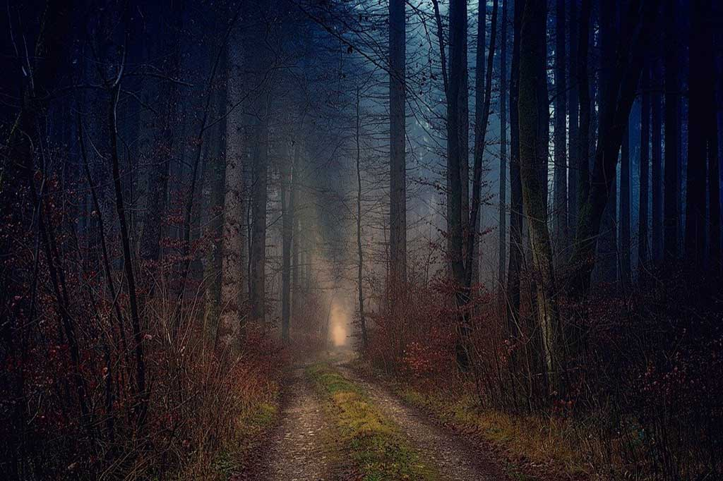 forest-path-tire-tracks-5697136